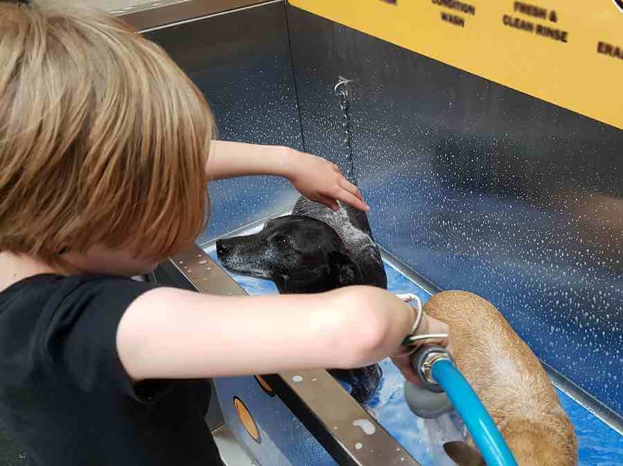 How often should you wash a Chihuahua?