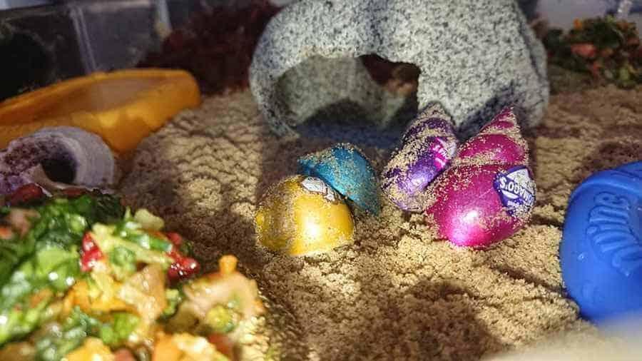 Hermit Crab Food