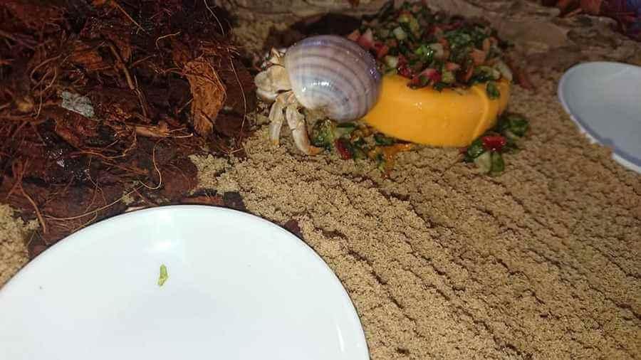 More Crab Food