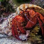 Hermit Crabs In The Ocean