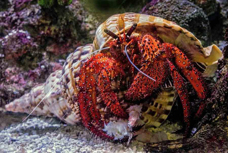 Hermit Crabs In The Ocean