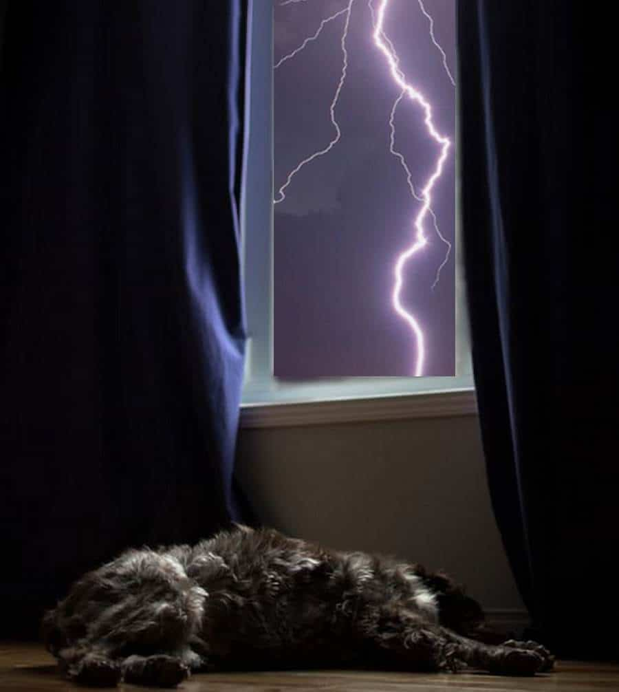 Why Are Dogs Scared Of Storms